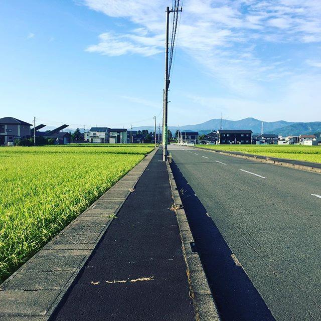 朝散歩、久しぶり。