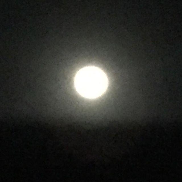 月がきれいだよ。