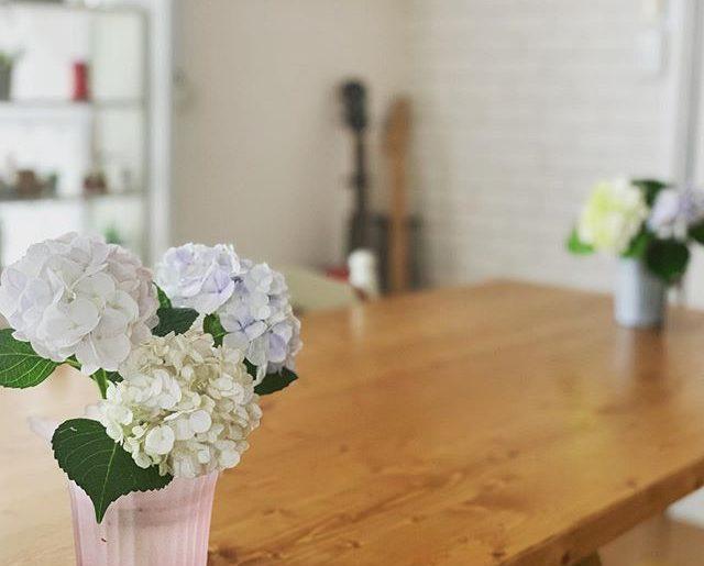 紫陽花に囲まれて仕事できるのもあとしばらくだなぁ。可愛くて癒される白い紫陽花たち、どんどん色が進んでいく。
