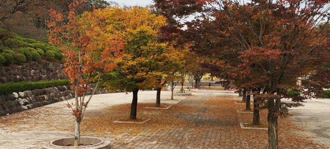 今日のお散歩。秋を楽しめるのも、あと少し。お外で歌うことになったのは、予定外やったけど、意外と気持ちよく楽しめました。人に会えるのは楽しいな。ありがとうございました。