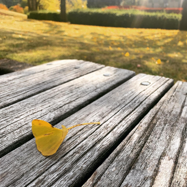 黄色、秋色、きらきら。