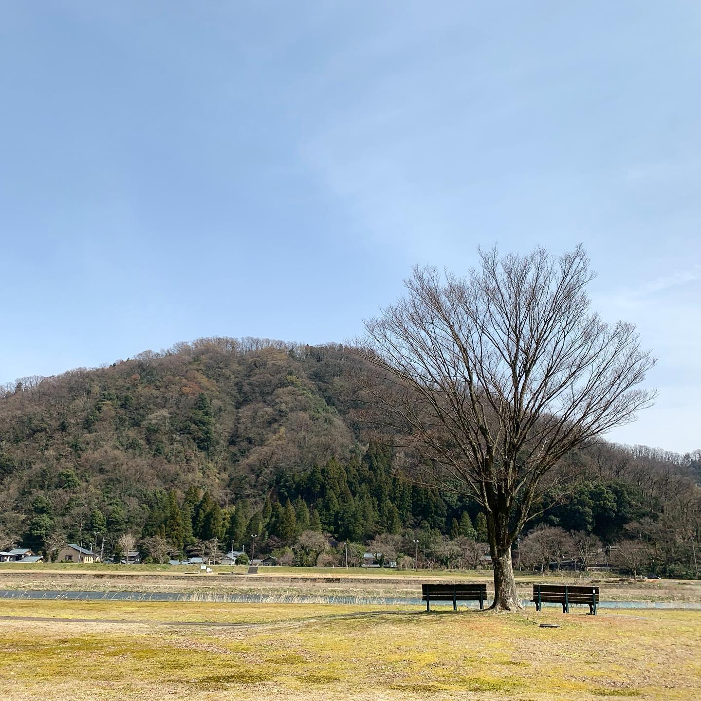 午前中の打ち合わせ終わり、事務所でお弁当を食べて、お昼休みの散歩コース。もうすぐ桜だね
